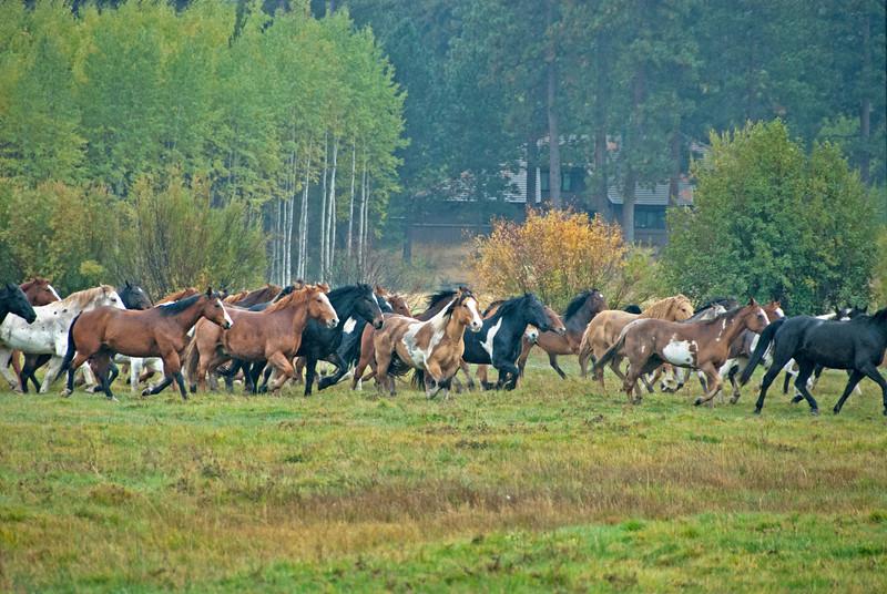 2010-1009-Horses-BBR-fall-synchronized-keown kate_DSC2615