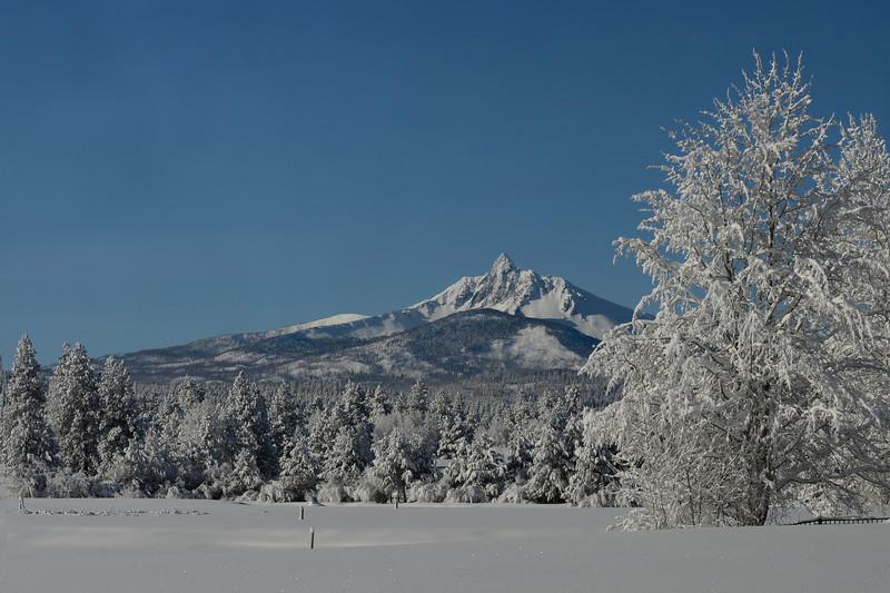 Winter Tree_KateThomasKeown_DSC9697 copy