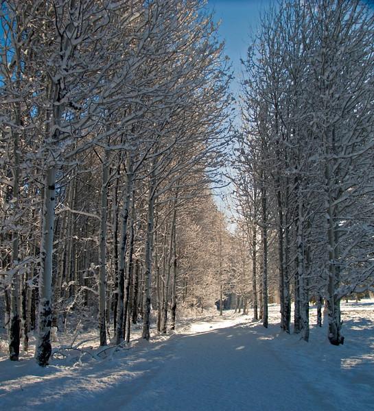 BBR-View-Sunlit-Aspens-KateThomasKeown_DSC0598