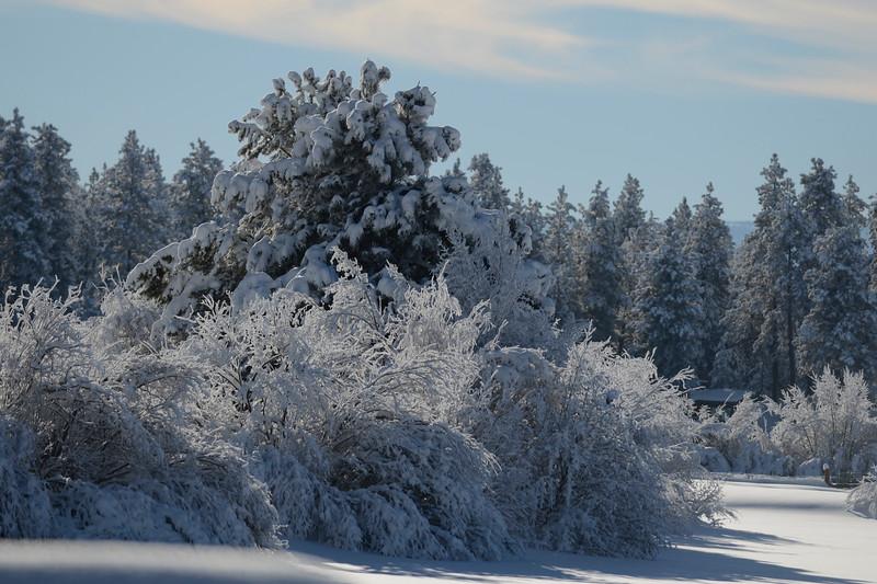 WinterTrees_KateThomasKeown_DSC9747