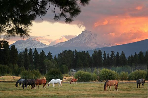 20170124_BBR_horses-sunset_091305c_KateThomasKeown_8313_050911