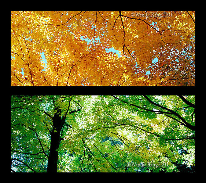 """""""Fall and Spring"""", Tea Town, New York."""