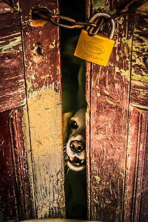 The Barking Guard