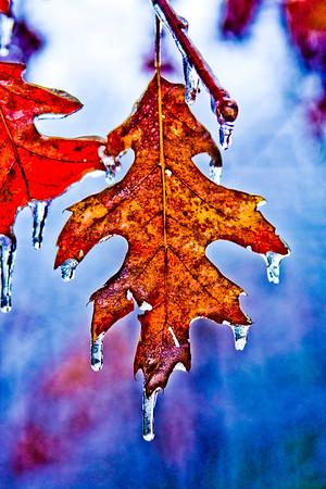 Vestiges of Winter