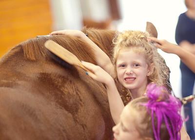 Horse Fun 15
