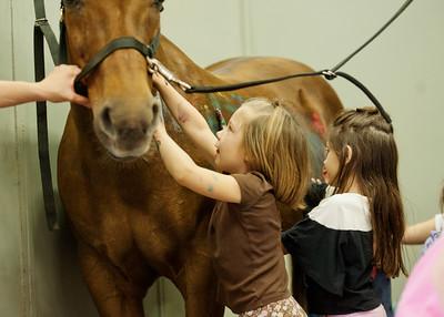 Horse Fun 27