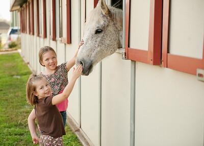 Horse Fun 24