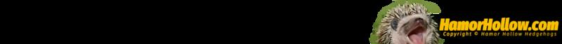 hah-gradient-bar-03-100