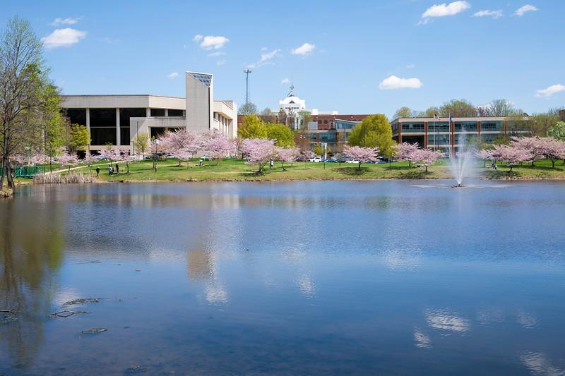 Cherry Blossoms Mason Pond.  <br /> Photo by:  Ron Aira/Creative Services/George Mason University