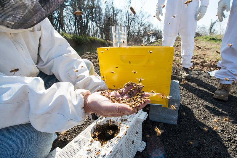 Honey Bee Initiative