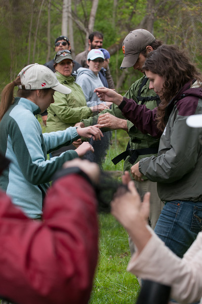 Professional and graduate students get hands-on experience setting up mist nets for bats. Photo by Evan Cantwell/Creative Services/George Mason University