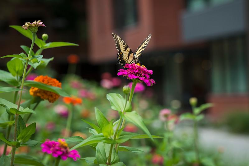 Fenwick Library Wildflowers