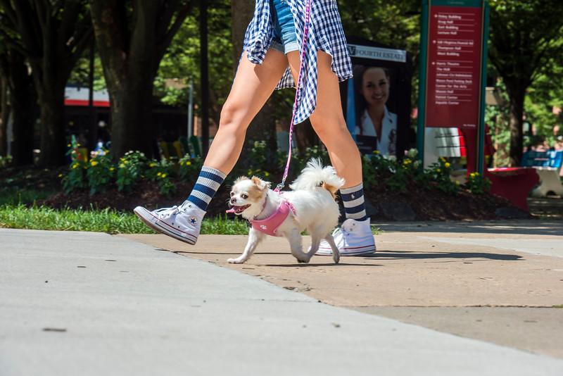Puppy on Campus
