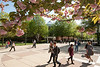 Spring at Fairfax campus