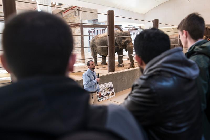 Elephants and Engineering