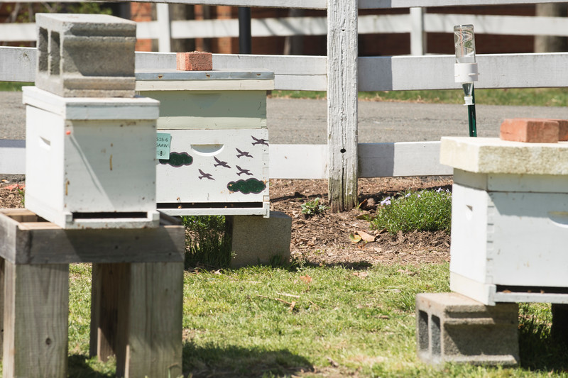 The newly renovated Bee Initiative apiary located on George Mason University's Fairfax campus. (Bethany Camp/Creative Services/George Mason University)