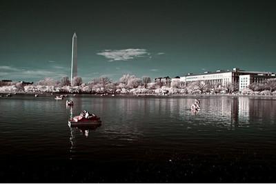 Blossom Boats