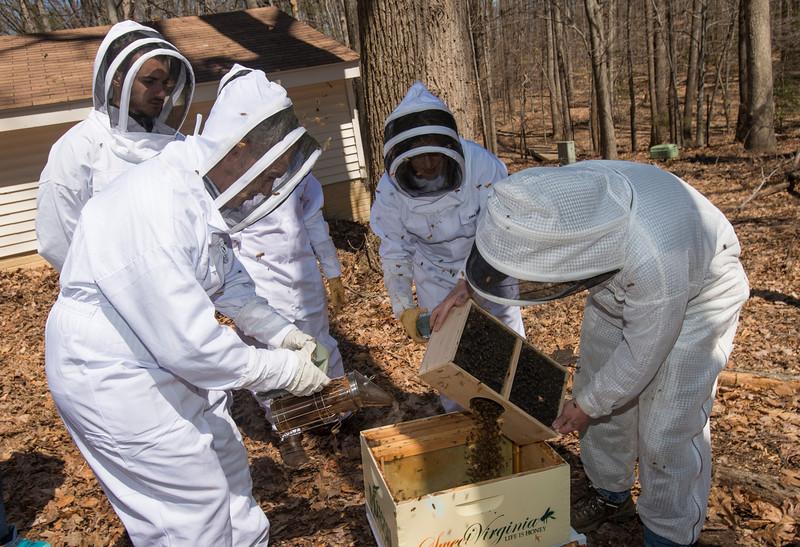 Mathy House bee apiaries