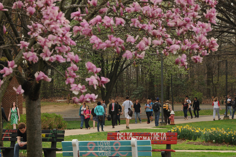 Students walking to class in the Spring.