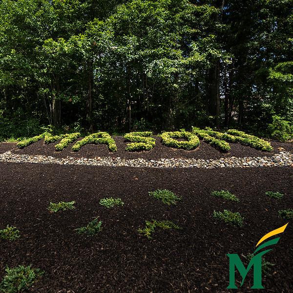 Mason hedge on the Fairfax campus.