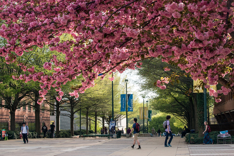 Spring Fairfax Campus