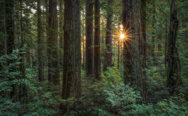 Sun burst in a mystical forest