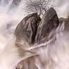 Cascade Creek - Lone Tree in Split Rock