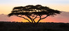 Umbrella Acacia Sunset - Tanzania