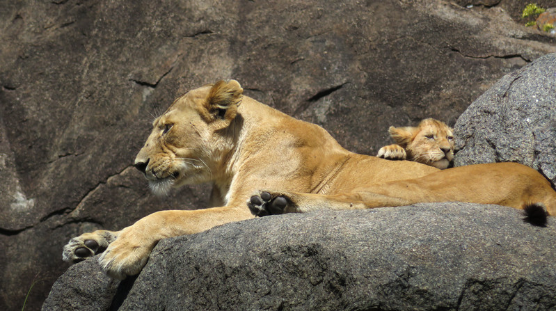 Hanging out with Mom - Tanzania