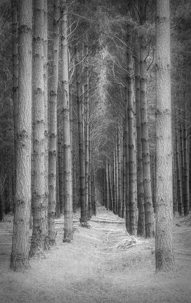 Picture Perfect Forest - Australia
