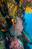 Colorful Reef - Great Barrier Reef