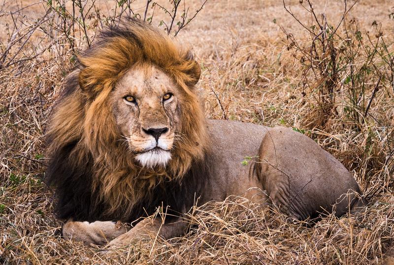 Looking majestic - Tanzania