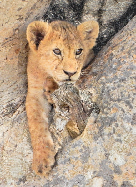 too cute for words - Tanzania