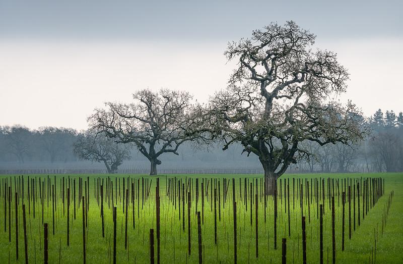 Sonoma Vineyards - Winter Wineland Event