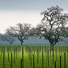 Sonoma Vineyards - Winter Wineland Event