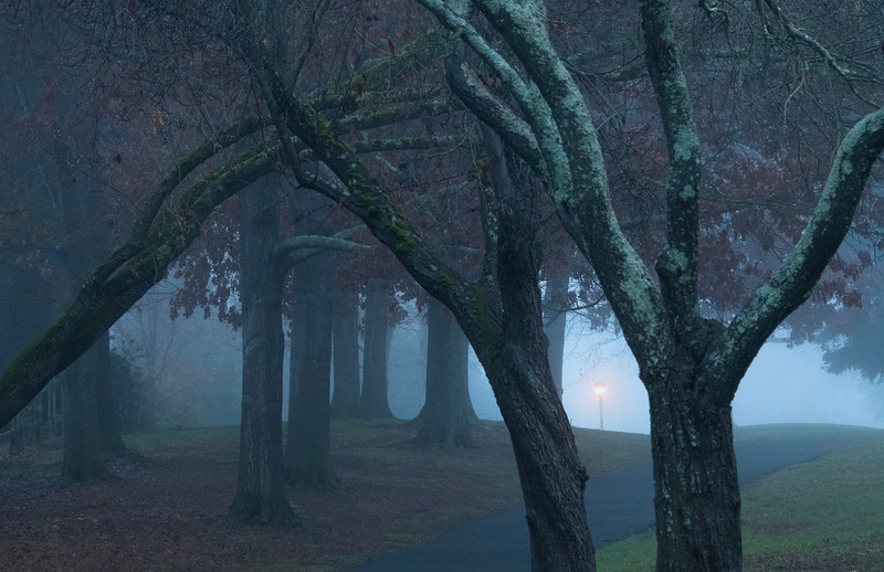 A foggy day in my hometown of Danville