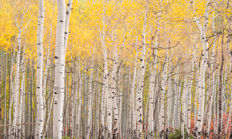 Aspen delight in Colorado
