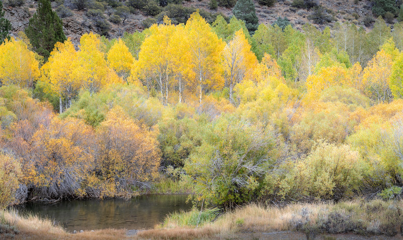 A roit of fall colors in the Sierras