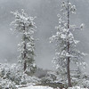 Snowy Day - Yosemite High Country