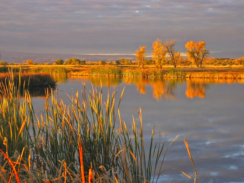 The Farm - Hardin, Montana