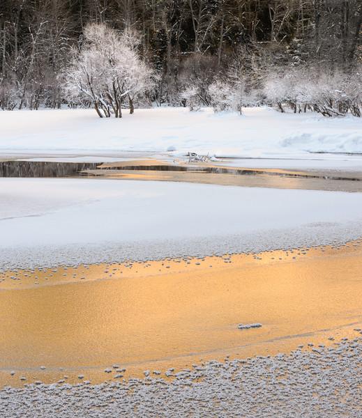 Merced Gold in Winter