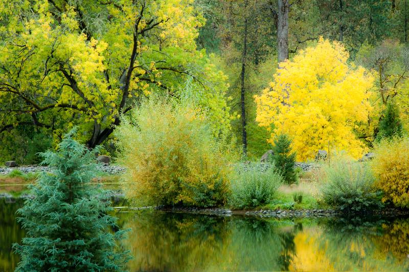 Pastel Colors of Oregon Autumn