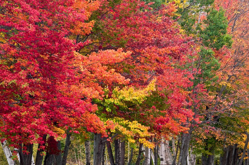 Fall colors by Pond - Gorham, NH