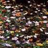 Leaves on Pond - Marlboro, VT