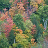 Fall Colors - Green Mountain National Forset, South Wardsboro, VT
