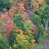 Fall Colors - Green Mountain National Forset, South Wardsboro, VT