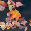 Autumn Leaves on Silver Lake