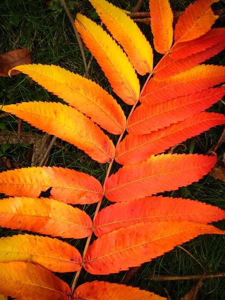 Autumn Glow - Gorham, NH