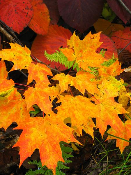 Autumn color - Kancamagus Hwy
