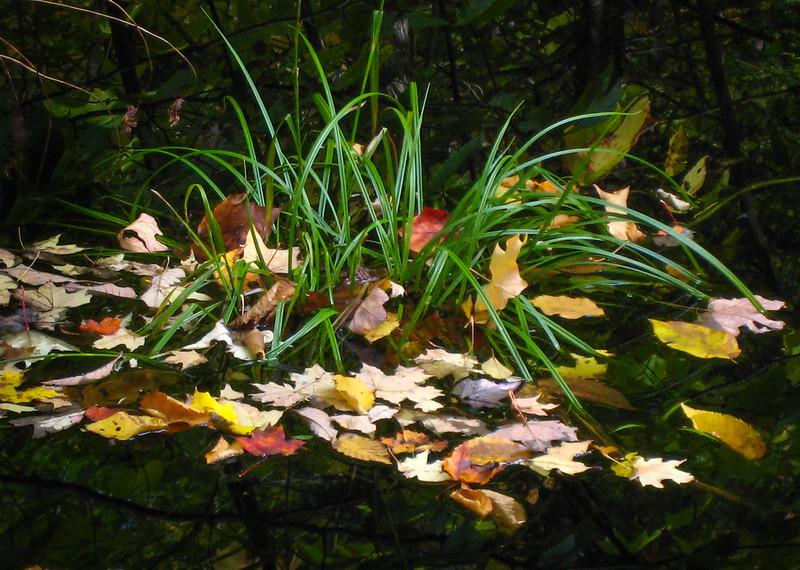 Pond off Hwy 9 - Molly Stark Trail, VT